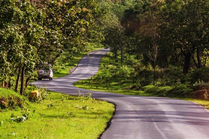 Drive through the wilderness on the winding roads of Bandipur forest